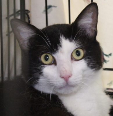 Can you adopt a feral cat